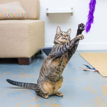 DIY: How to Make Your Own Cat Toys