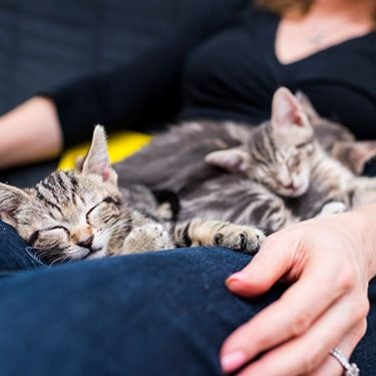 The 6 Life Stages of Your Feline