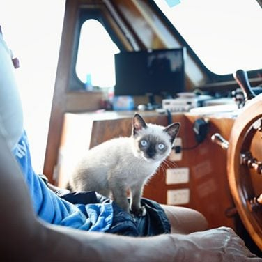 Cats of the High Seas