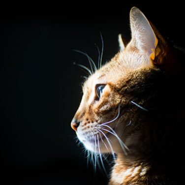 Should Your Cat Be Indoors or Outdoors?