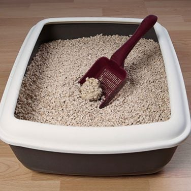 How to Read the Litter Box for Health Clues
