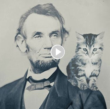 Famous Cats Through History